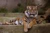 tigris mart halálra egy férfit