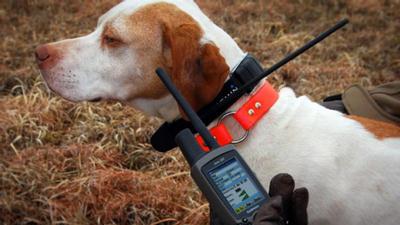 gps kutyanyakörv vadászoknak